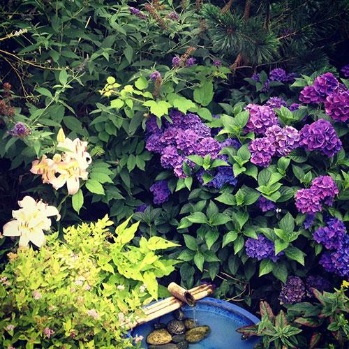 ... Sarah Lavalley Garden Designs/gardens ...